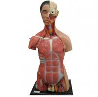 Nửa cơ thể người